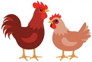 Risque Influenza aviaire - Sécurisation des volailles